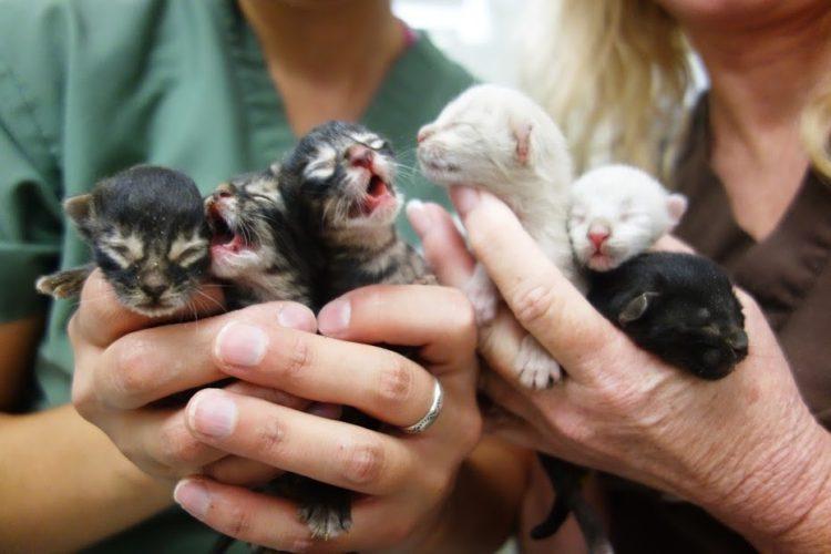 basurero salva gatitos 1