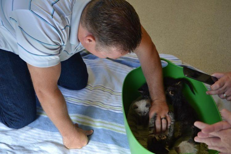 basurero salva gatitos 4