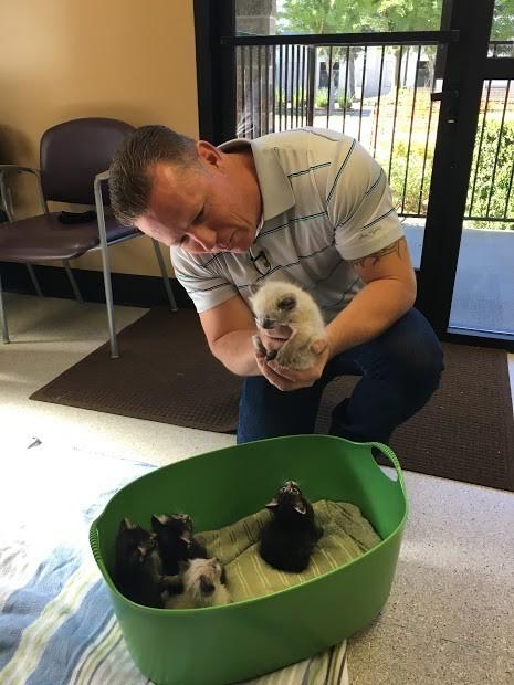 basurero salva gatitos 6