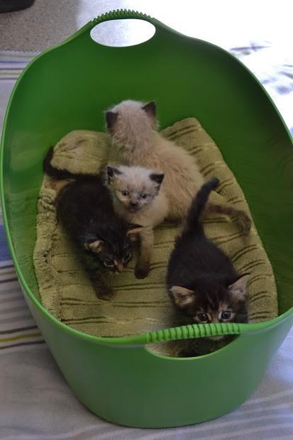 basurero salva gatitos 7