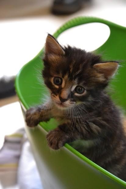 basurero salva gatitos 9