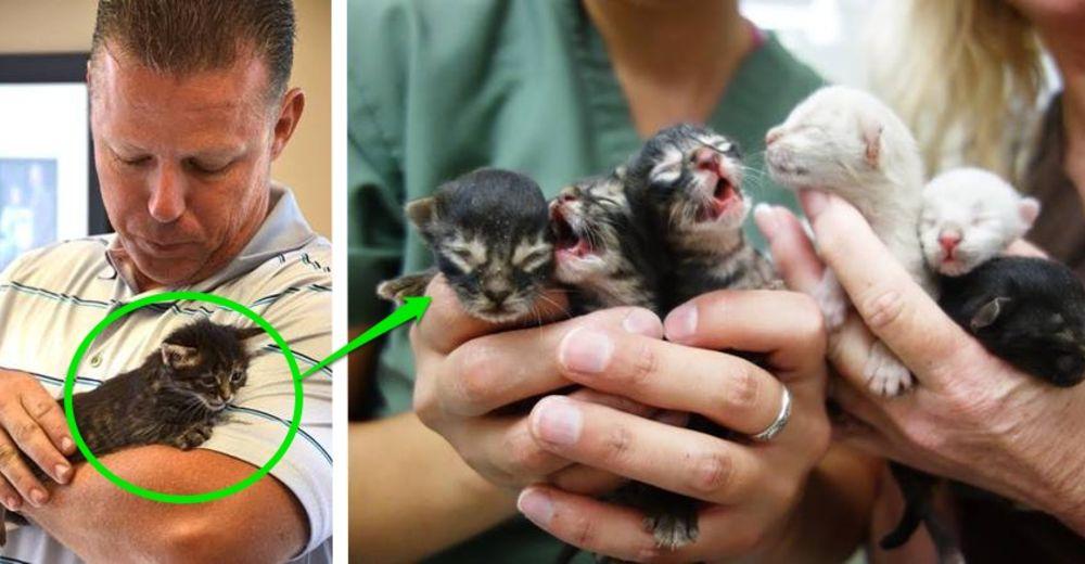 basurero salva gatitos id