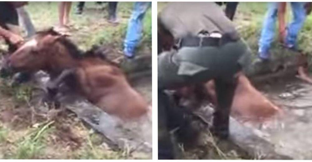 caballo rescatado en colombia id