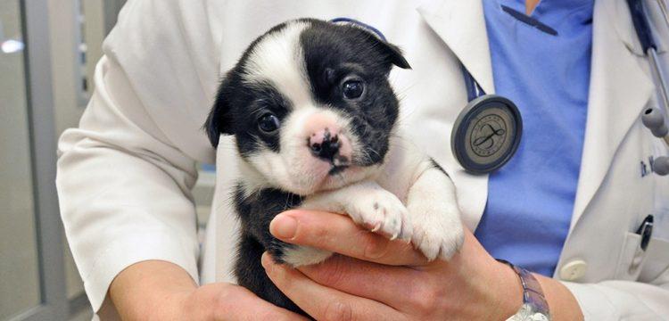 cachorrillo-recupera-cirugia1