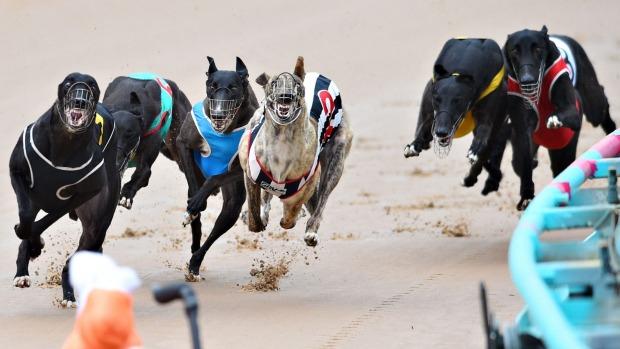 carreras-perros-galgo1