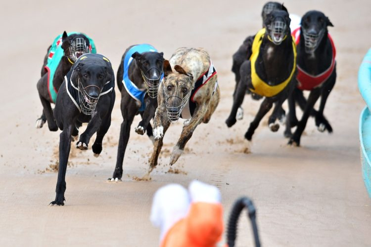 MELBOURNE, AUSTRALIA - FEBRUARY 18: General view of race meeting at The Meadows Greyhound track on February 18, 2015 in Melbourne, Australia. The Greyhound racing industry is under scrutiny following a Four Corners investigation that revealed trainers and owners across Australia allegedly using the illegal training method of live baiting to improve the dog's performance. (Photo by Vince Caligiuri/Getty Images)