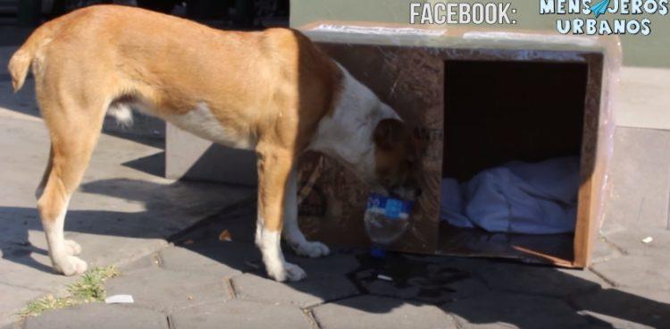 casitas-para-perros-de-la-calle1
