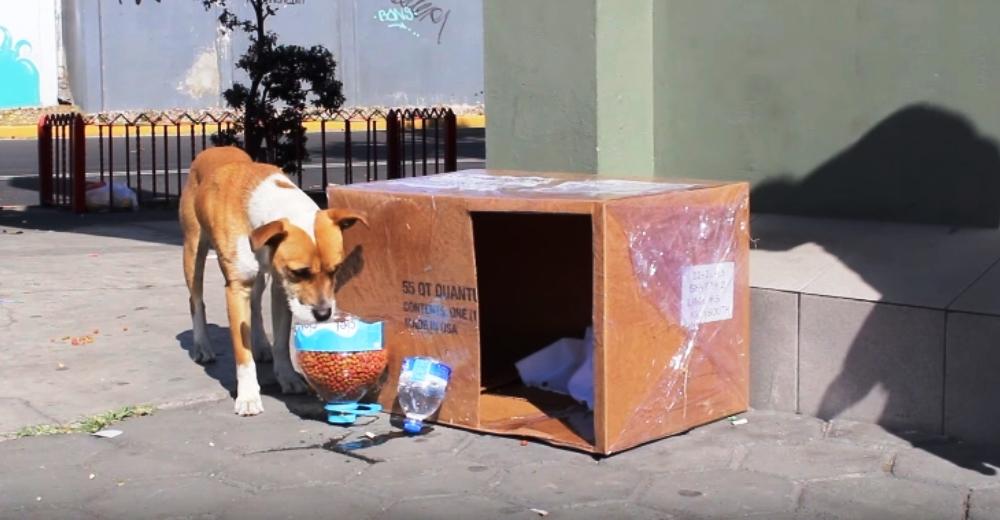 casitas-para-perros-de-la-calle2 - Copy