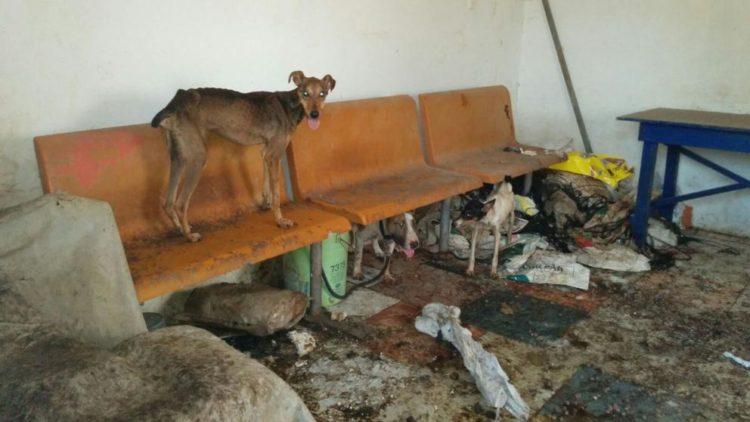 caso-perro-maltratado-chiclana1