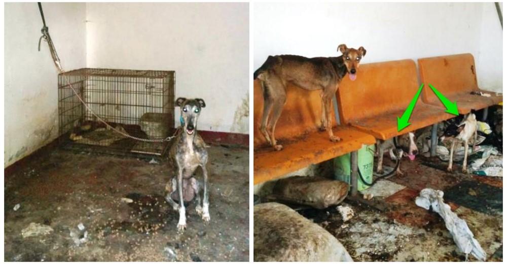 caso-perro-maltratado-chiclana3