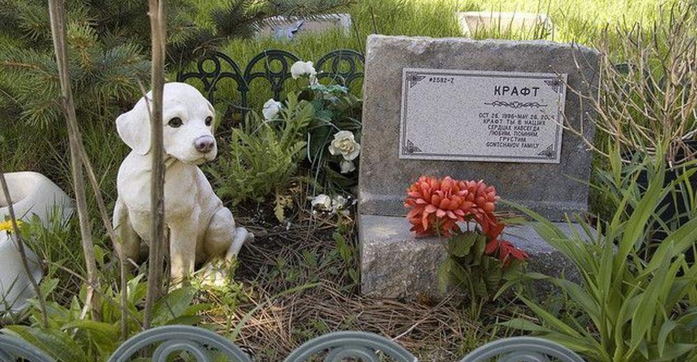cementerio-mascotas