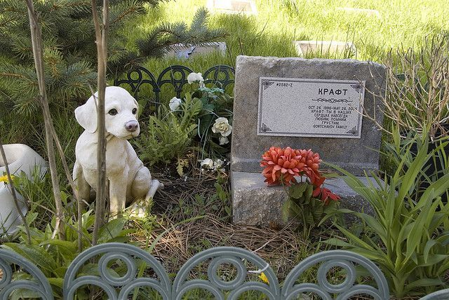 cementerio-perritos