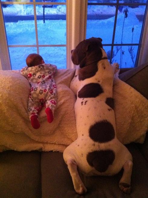 compartir-vida-perro1