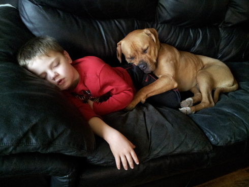 compartir-vida-perro10