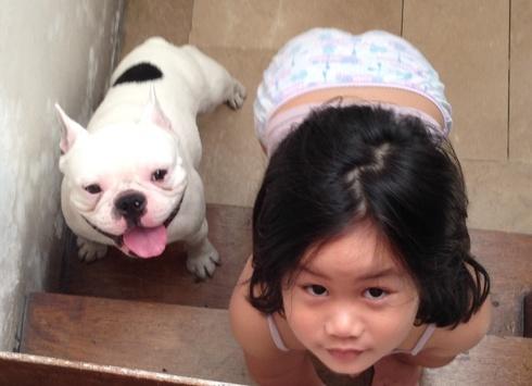 compartir-vida-perro11