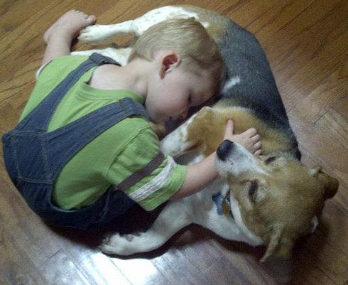 compartir-vida-perro12