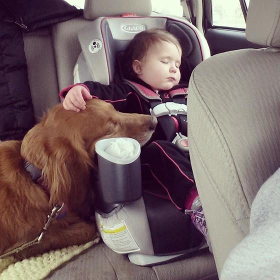 compartir-vida-perro15