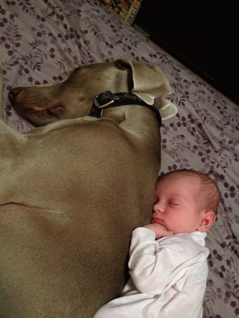 compartir-vida-perro2