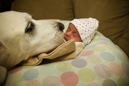 compartir-vida-perro20