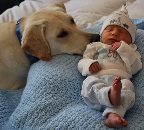 compartir-vida-perro3