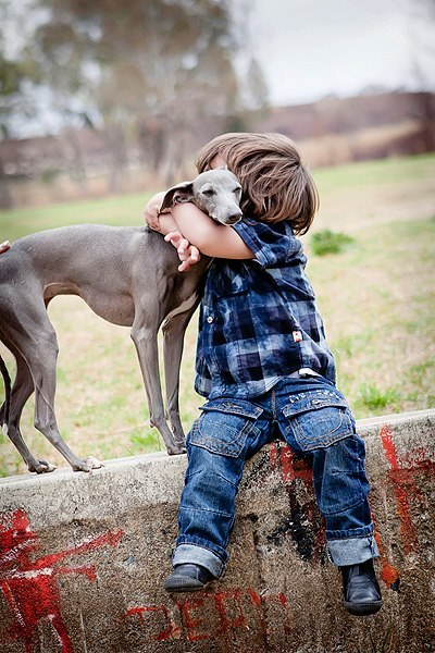 compartir-vida-perro6