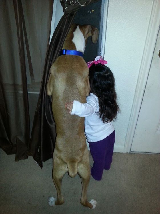 compartir-vida-perro7