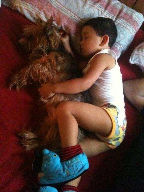 compartir-vida-perro9