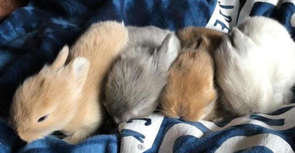 conejitos recien nacidos destacada