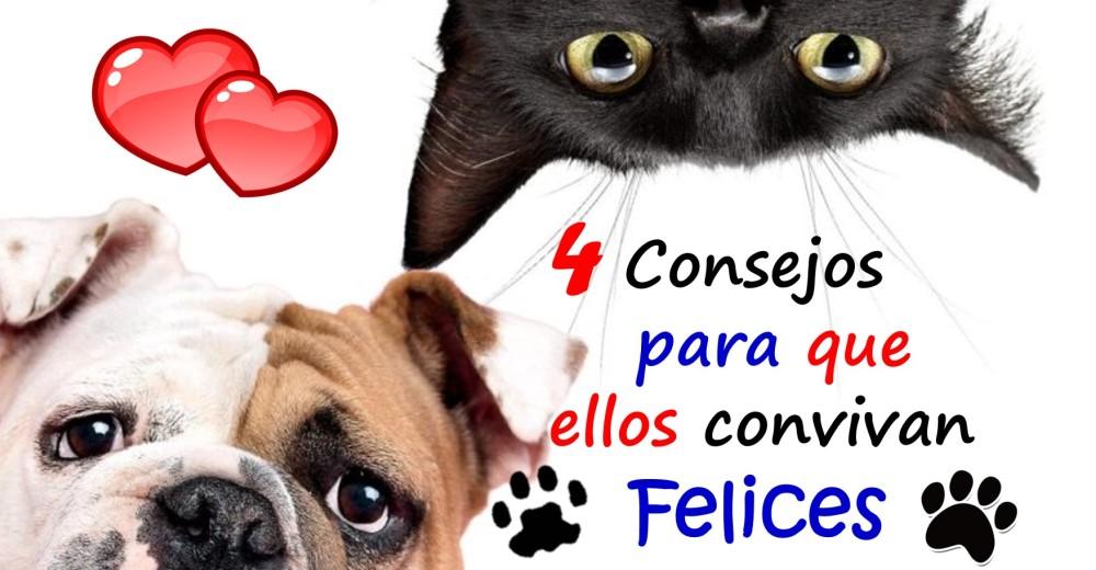 consejos-para-que-gatos-y-perros-convivan-felices2