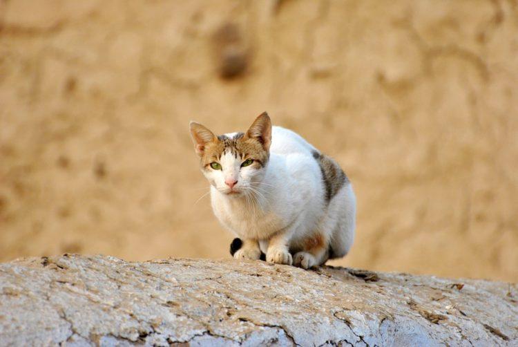 cosas-sobre-gatos1