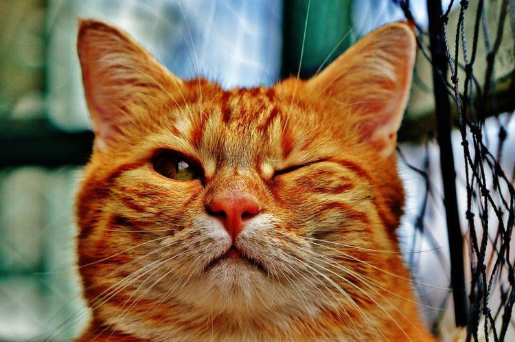 cosas-sobre-gatos2