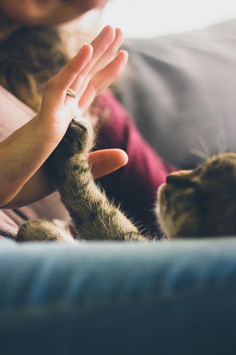 cosas-sobre-gatos4