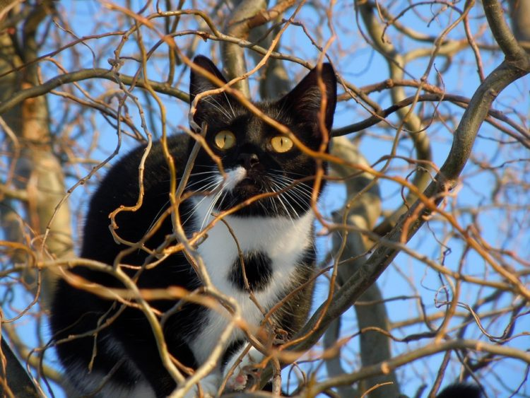 cosas-sobre-gatos9