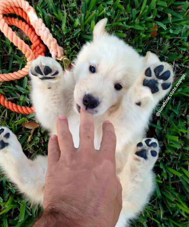 dia-internacional-cachorros10