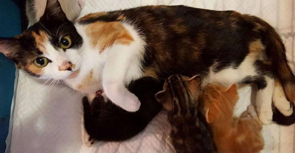 Princess, la gatita que sobrevivió a un asesinato quedando paralizada, lucha por sus bebés