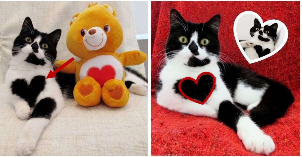 gato-con-corazon-dibujado-pecho