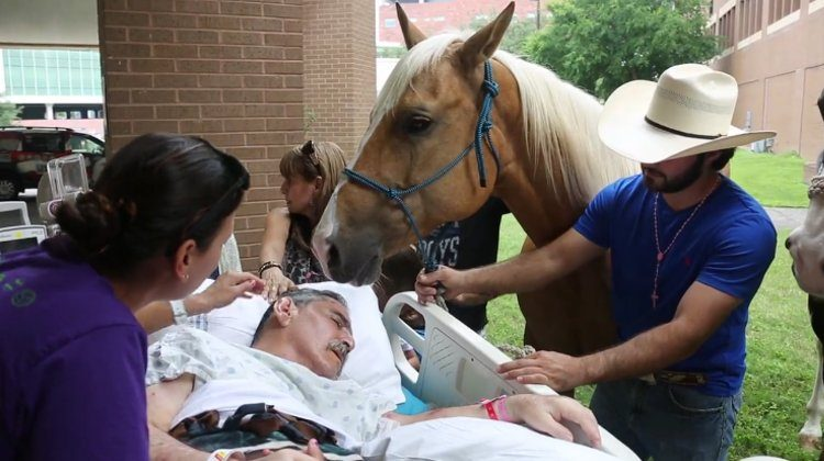 hombre-es-visitado-por-caballos1