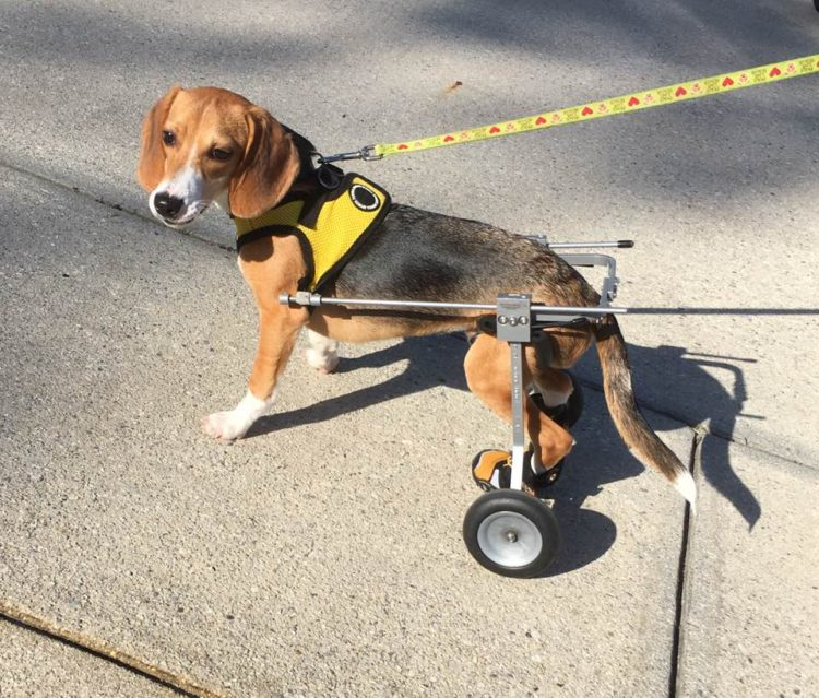 howie-crecido-silla-ruedas