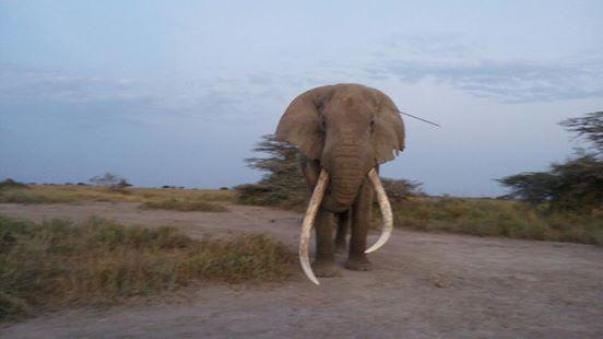 intentan-matar-a-elefantes1