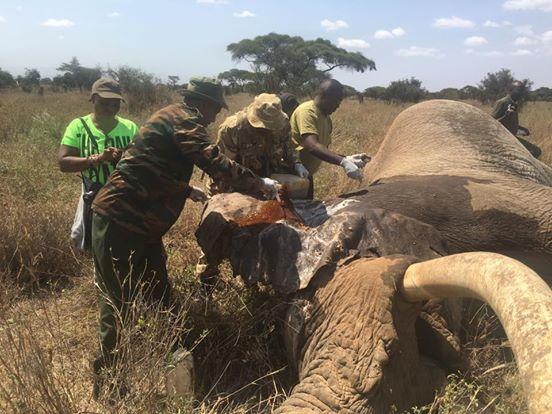 intentan-matar-a-elefantes2