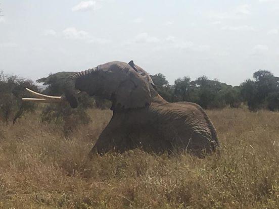 intentan-matar-a-elefantes3