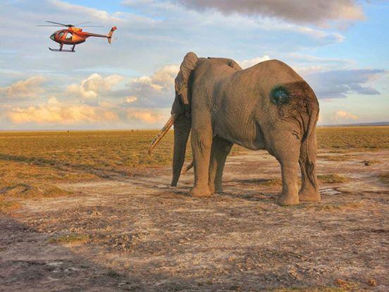 intentan-matar-a-elefantes5