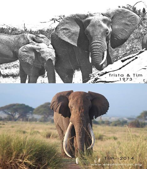 intentan-matar-a-elefantes6