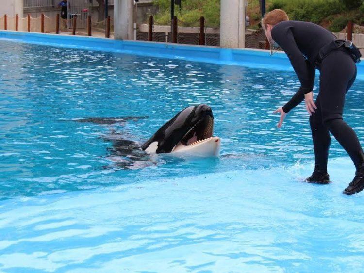 orcas-sufriendo-seaworld1