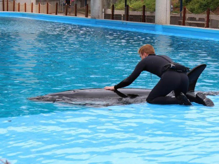orcas-sufriendo-seaworld3