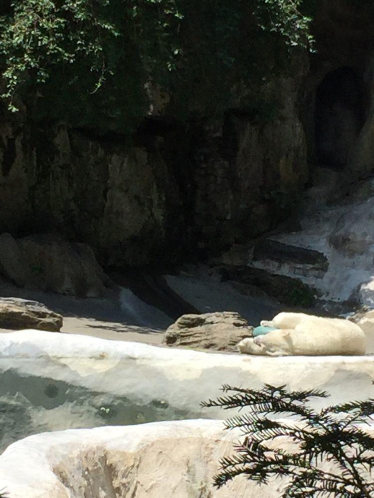 oso-polar-nueva-york2