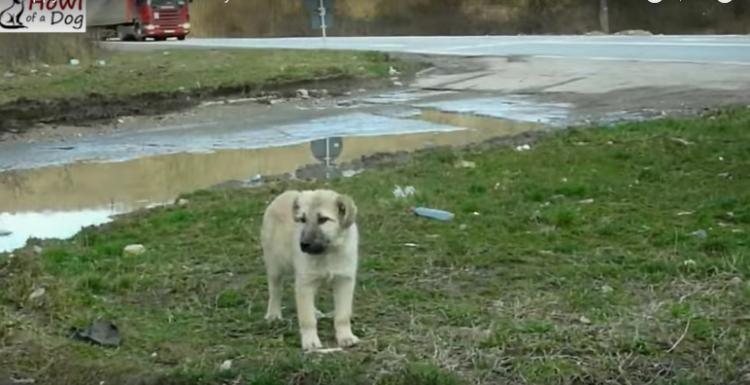 perrito-calle-abandonado2