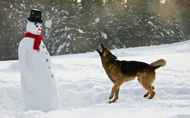 perritos-munecos-nieve1