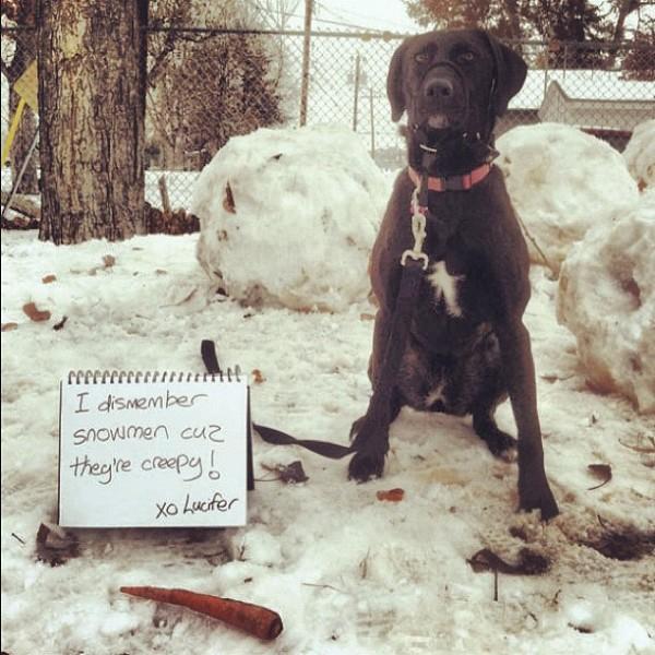 perritos-munecos-nieve11