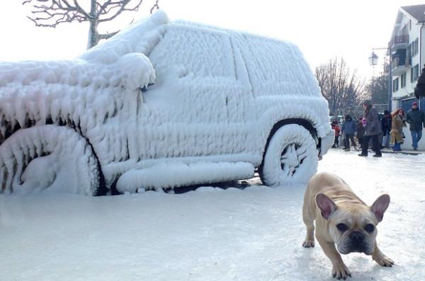 perritos-munecos-nieve12